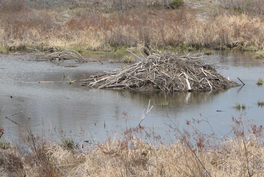 Beaverlodge