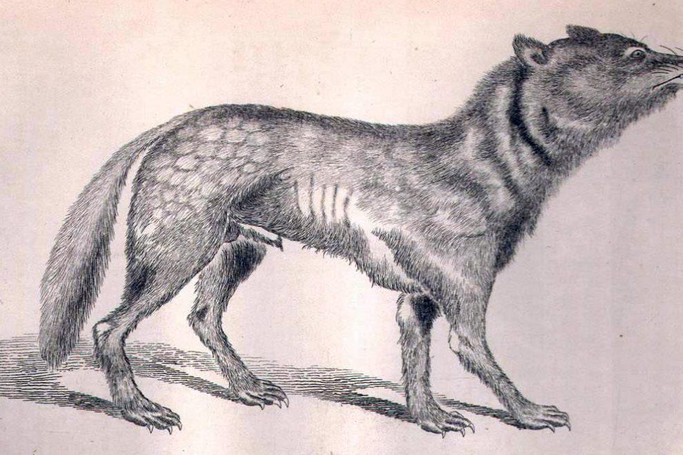 ニホンオオカミについて