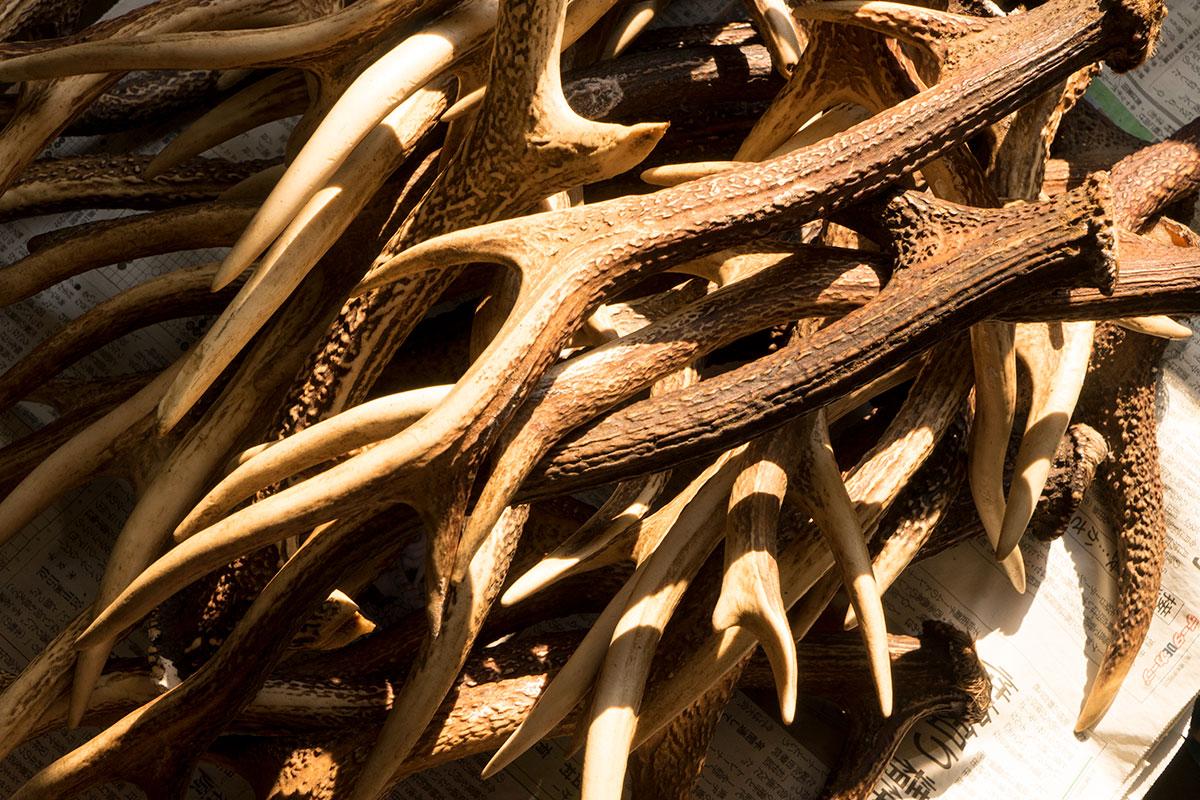 日光で乾燥中の鹿角