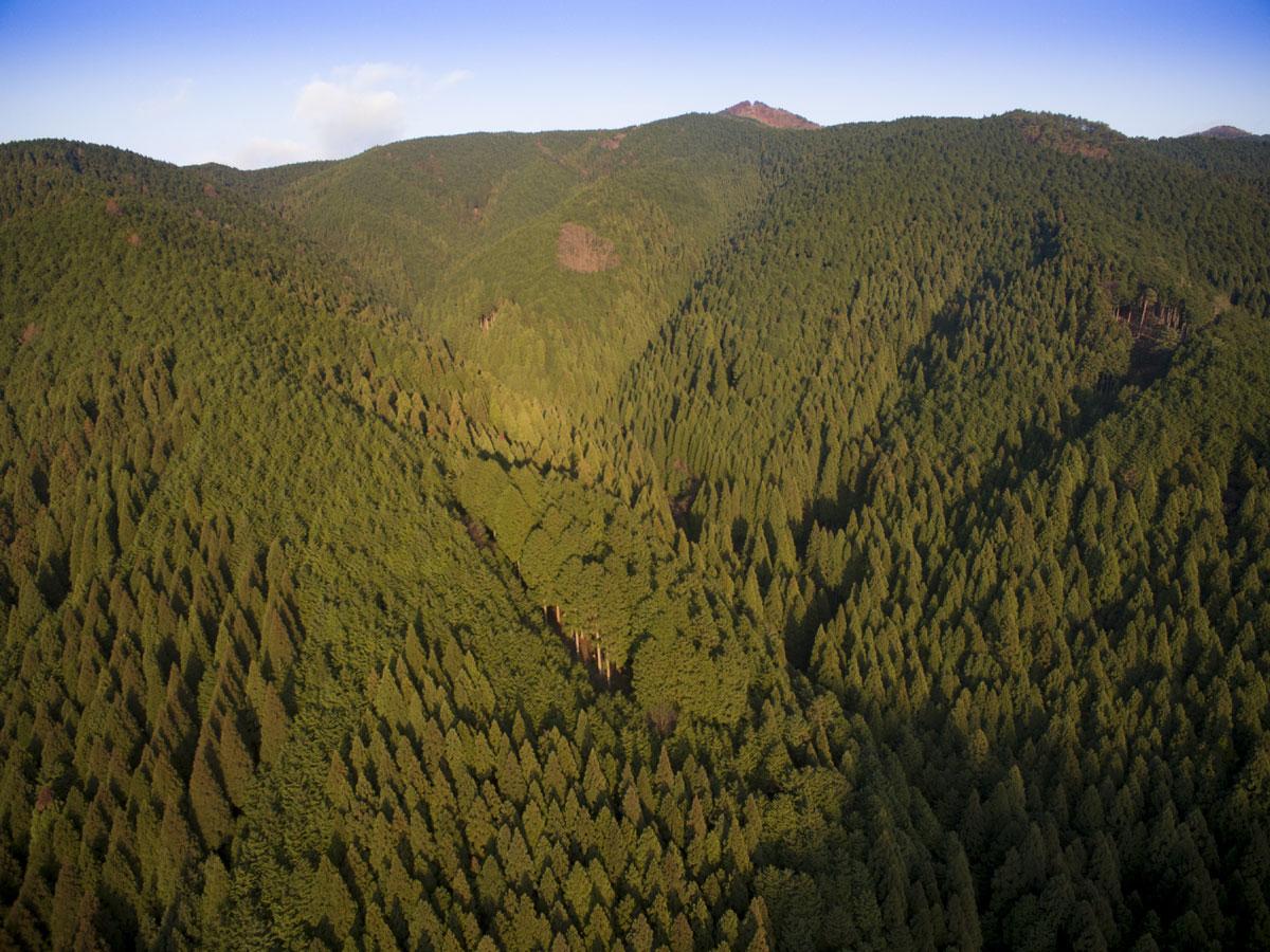 杉と檜の人工林