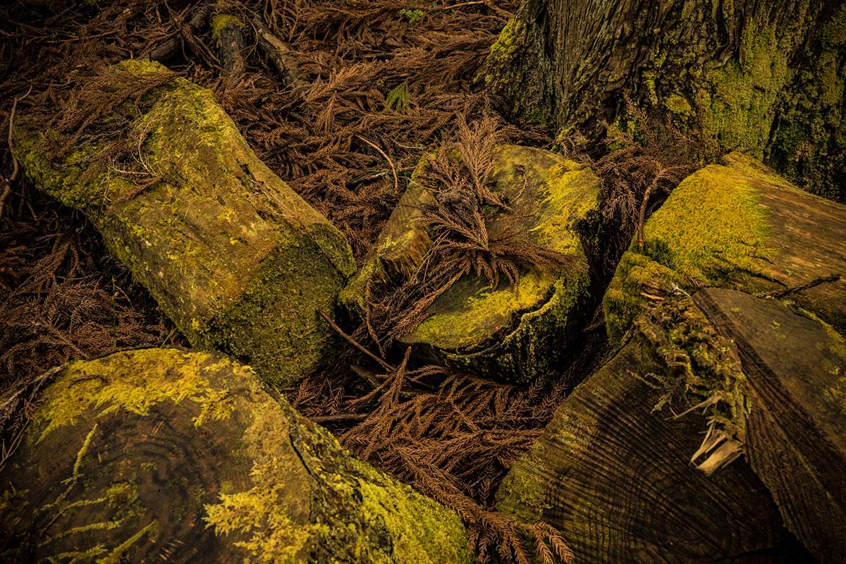 伐採後の針葉樹林の地表