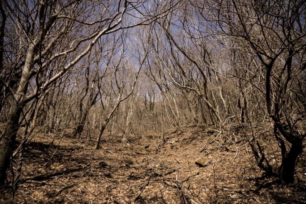 九重町の山林