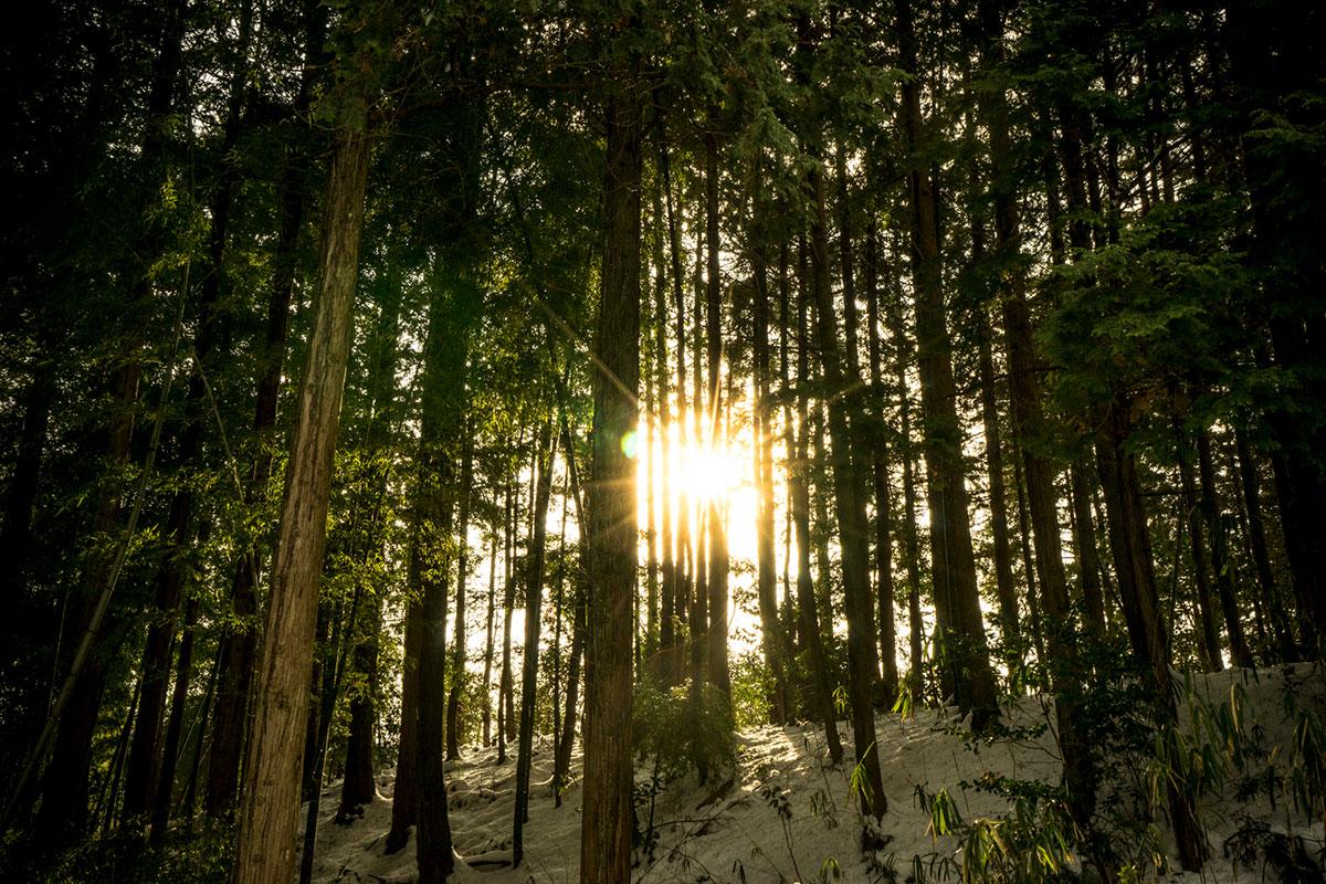 北広島町の人工林