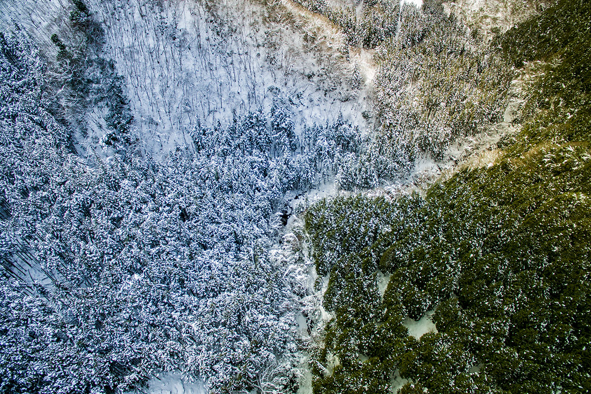 松原の虫木峠周辺