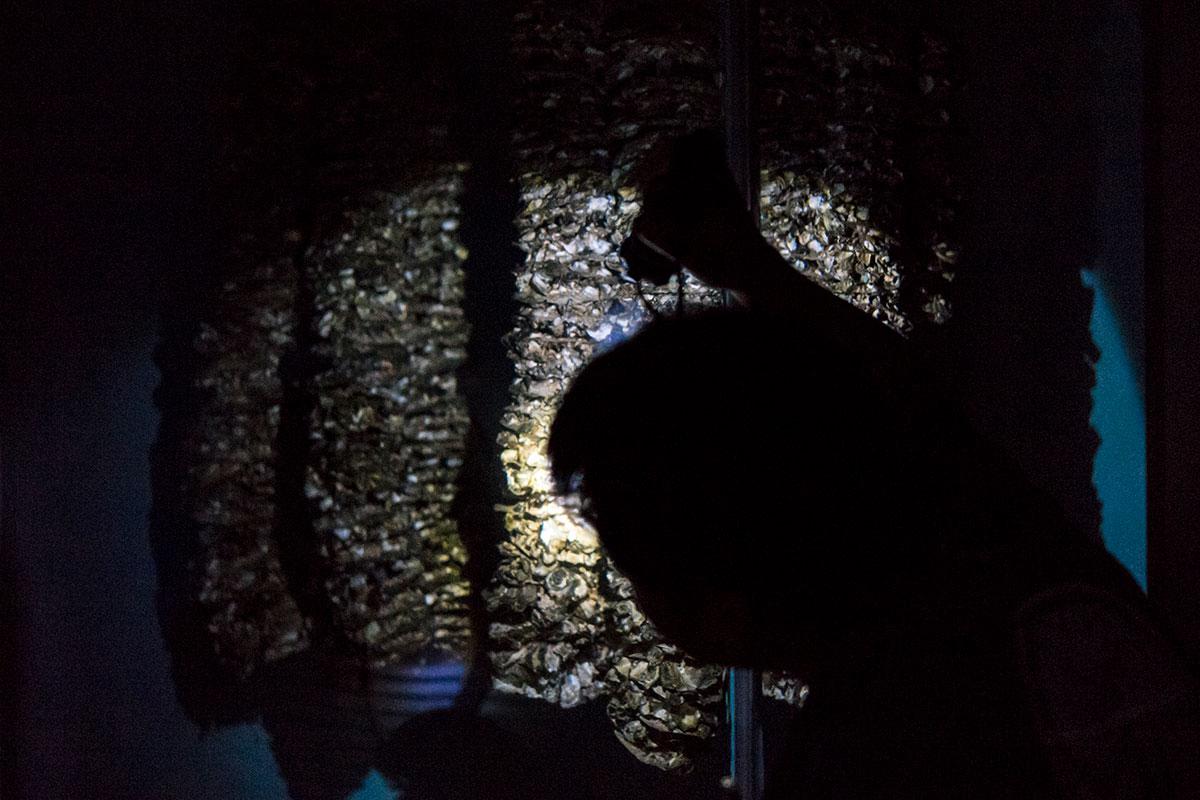 牡蠣筏の生態系を再現した水槽