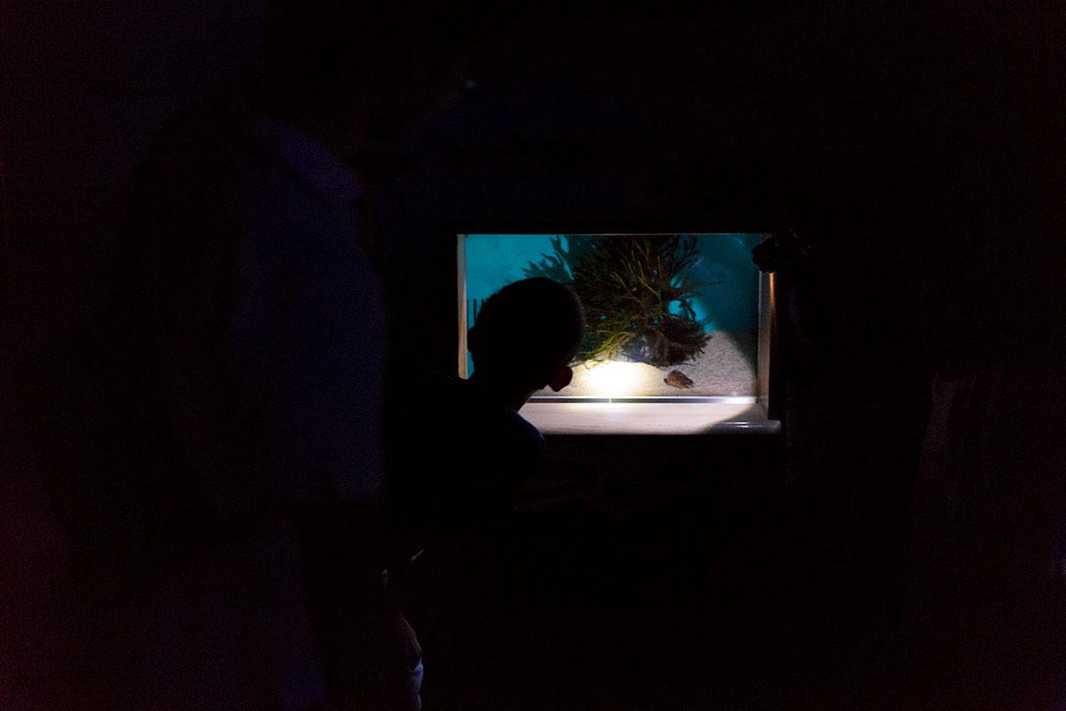 懐中電灯を片手に水槽を覗き込む。