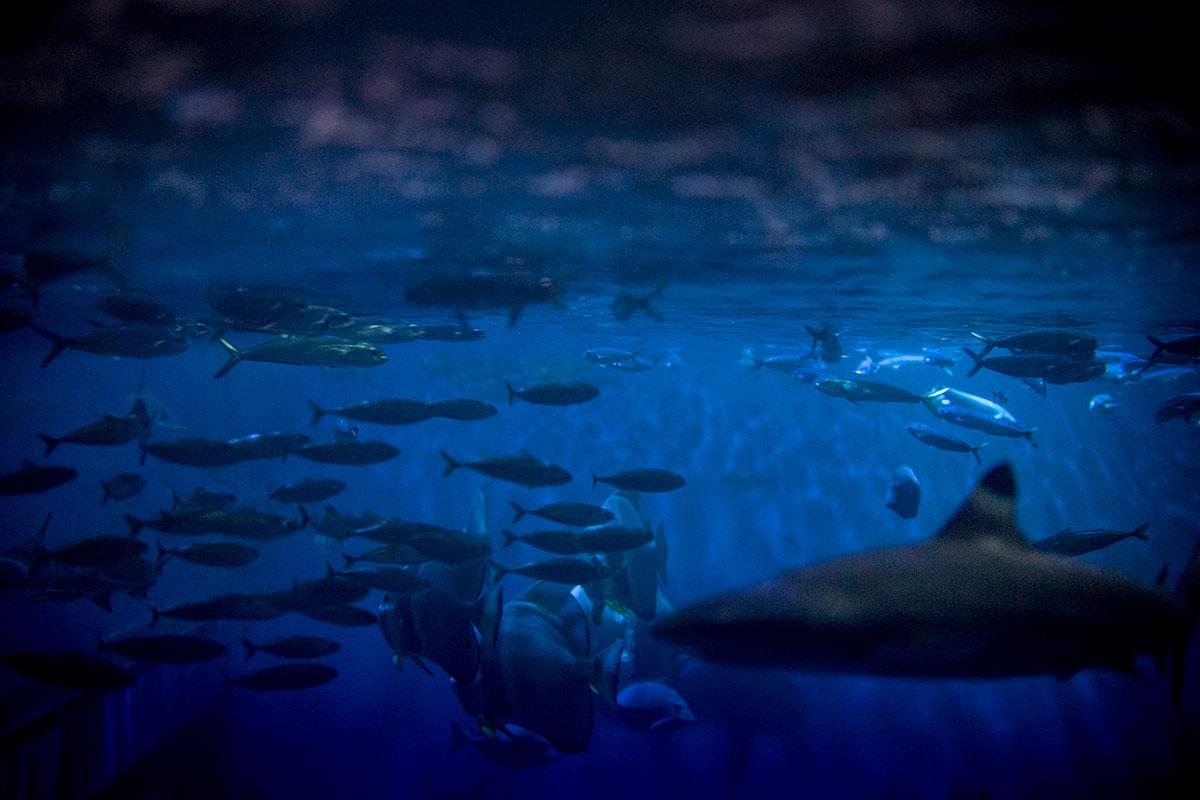 夜の水槽内