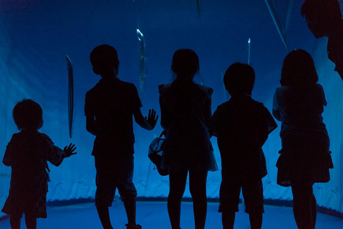 タチウオの水槽と子供たち