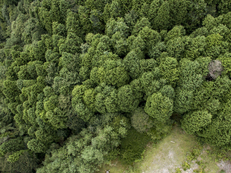 安佐北区の人工林