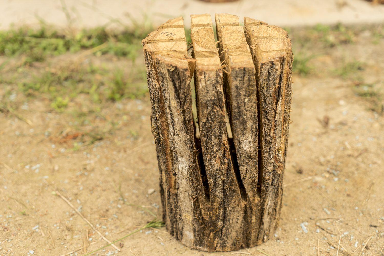 栗の木のスウェディッシュトーチ