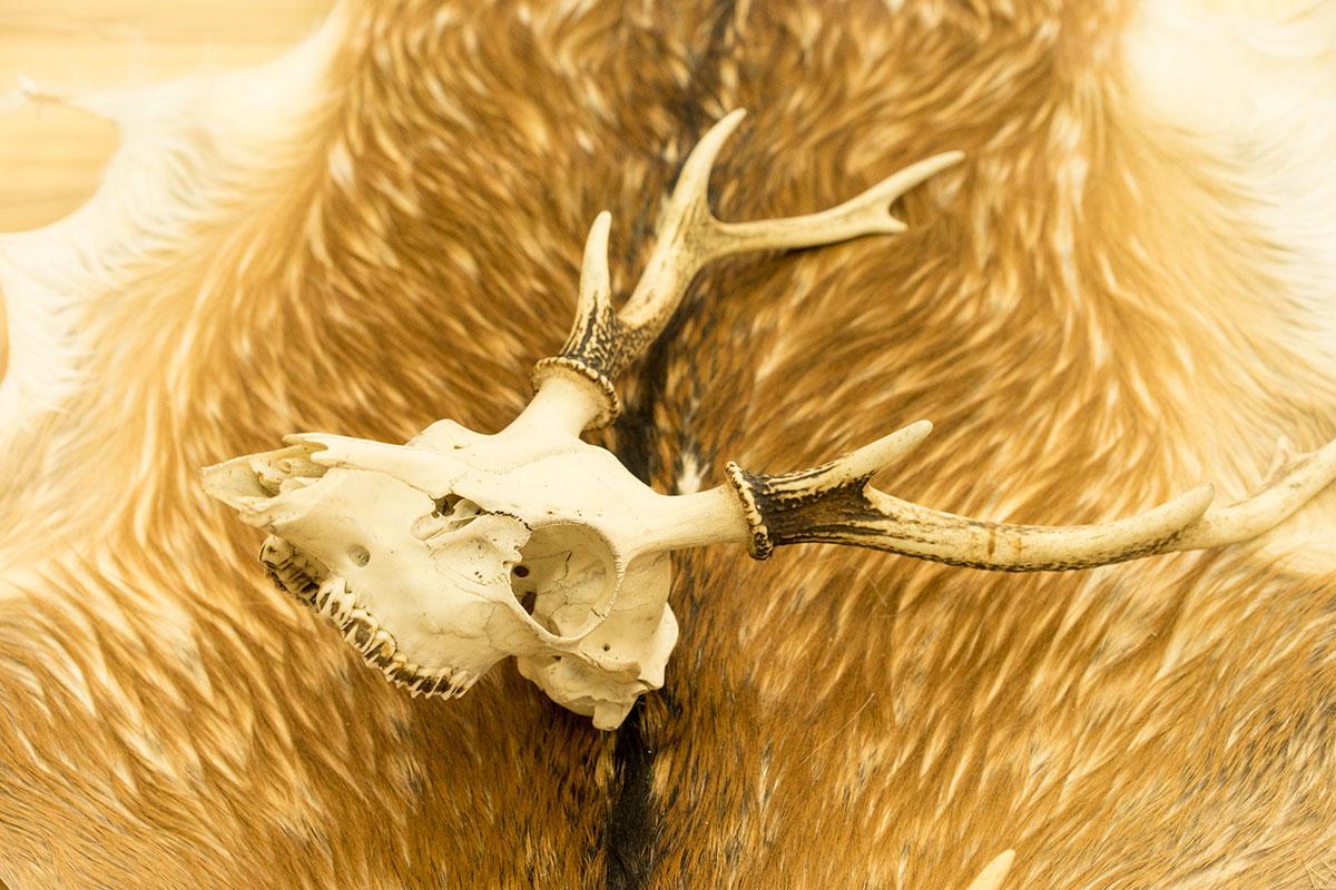 鹿の毛皮と角のオブジェ