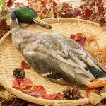 水鳥たちが害鳥に..諫早湾に見る野生鳥獣の実情