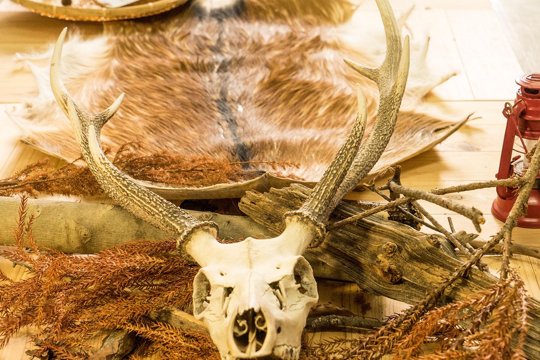鹿の角と頭部