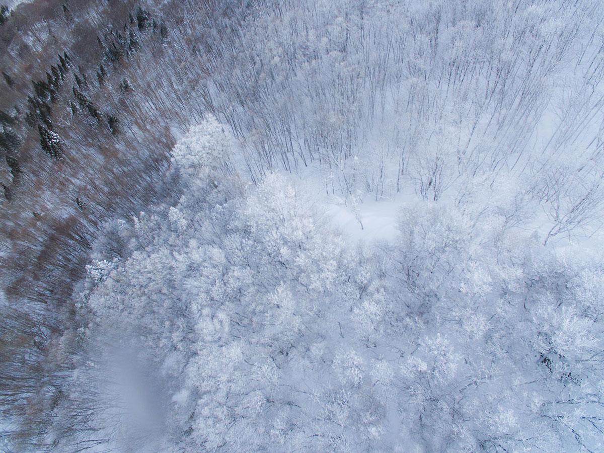 樹氷の境目