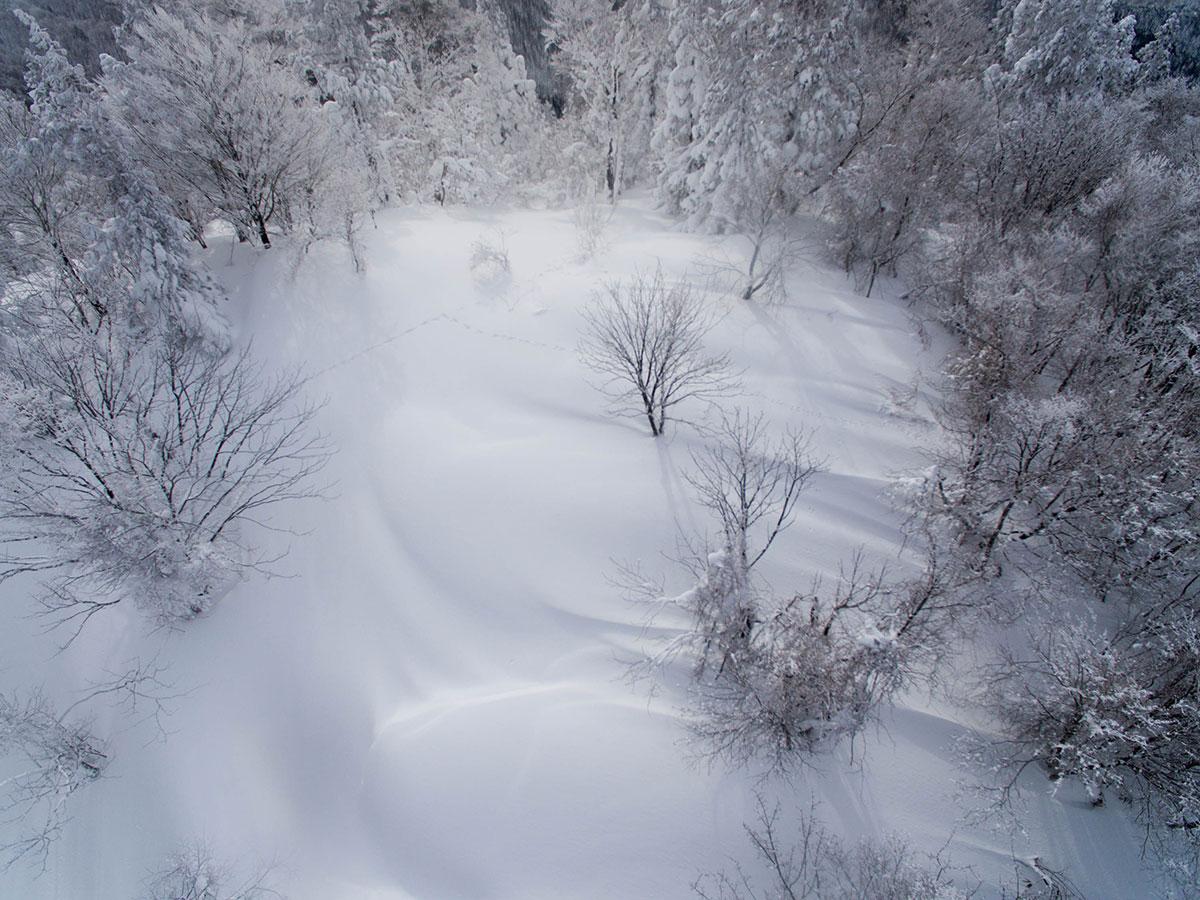 山頂に野うさぎの足跡