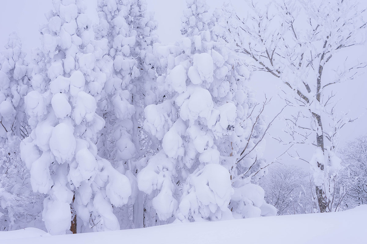 豪雪パウダー。恐羅漢山頂