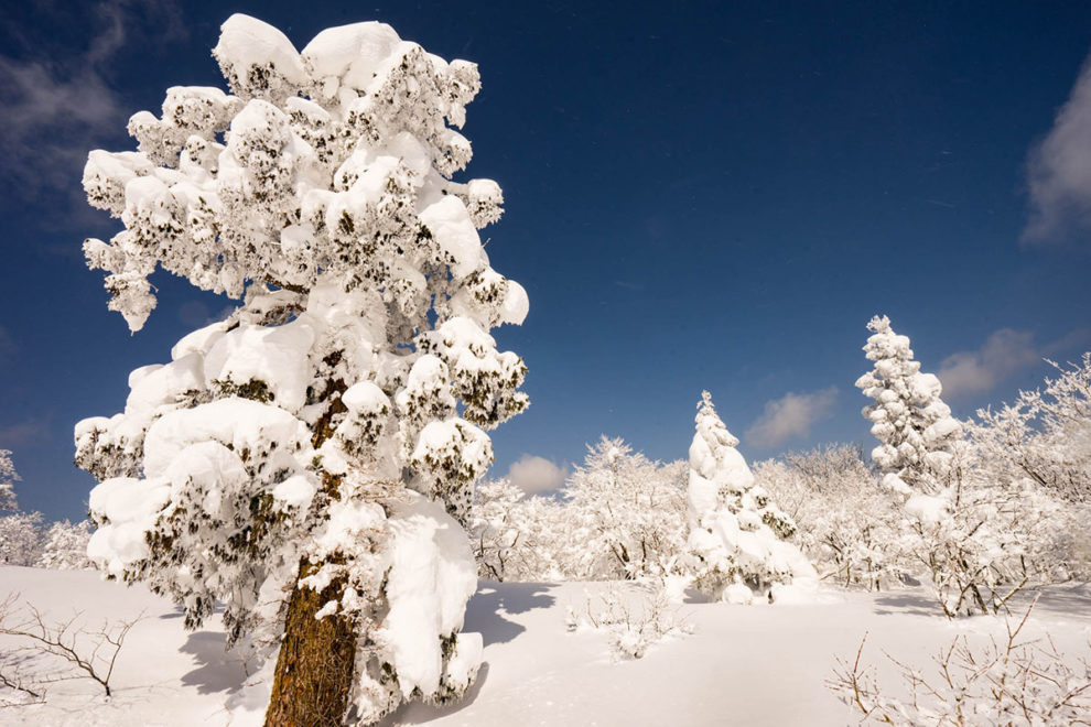 恐羅漢山頂付近の樹氷