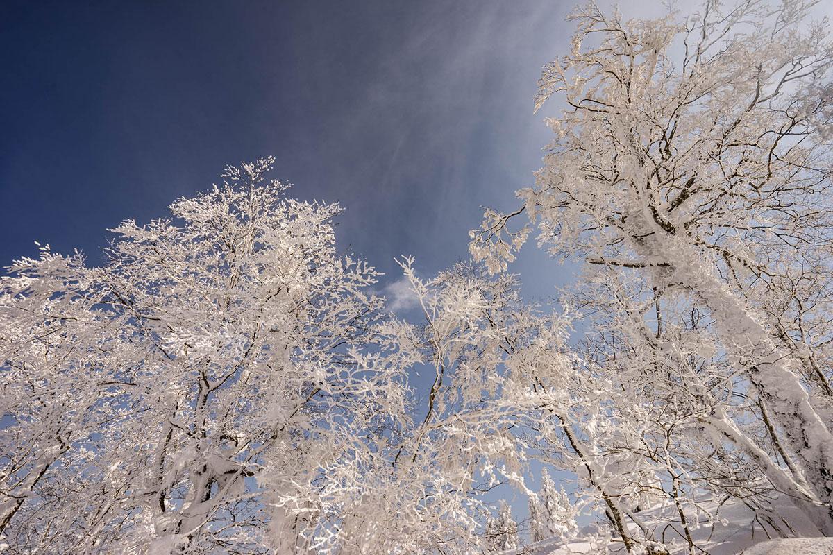 樹氷と青空 恐羅漢山頂のブナ原生林