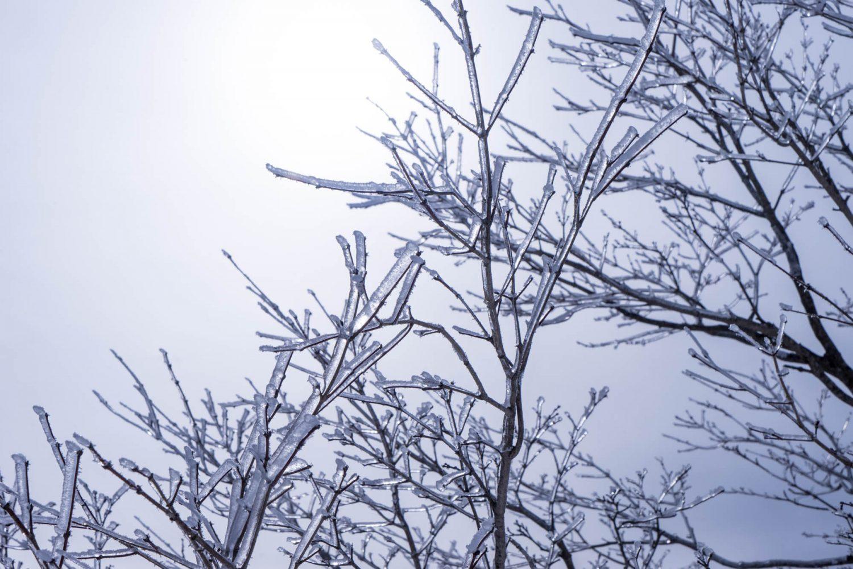 凍りついた春の木々