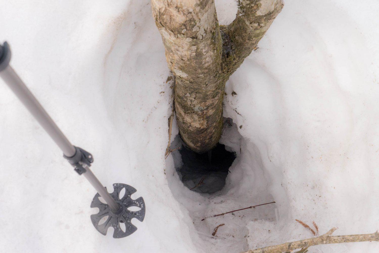 木の周りから雪が溶け始める