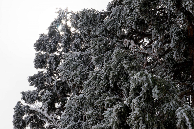恐羅漢の木々