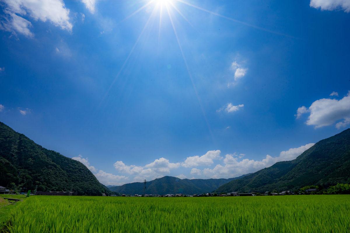 玄米と肥満抑制について-マイクロバイオームの視点