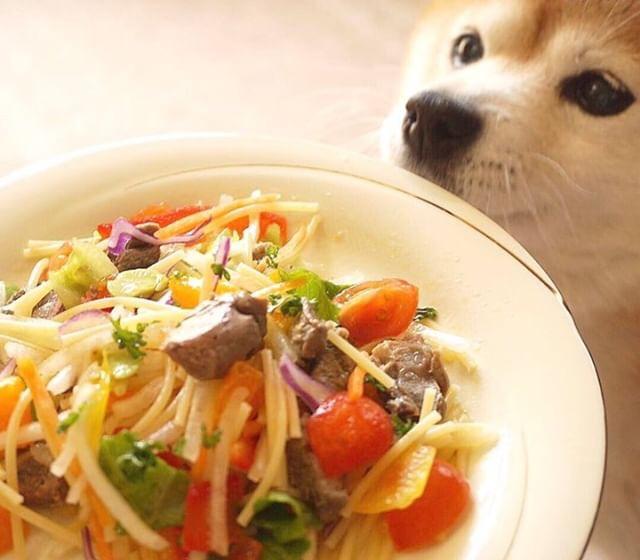 パスタを使った犬レシピ