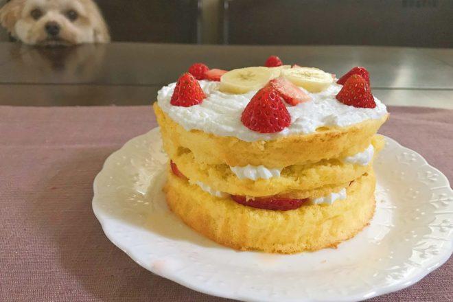 プラムちゃんお誕生日会 ~Forema鹿肉ハンバーグとお誕生日ケーキを作ろう!~