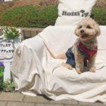 【dog event】「犬部 コラボワンライフフェスタ2019」へ行ってきました!