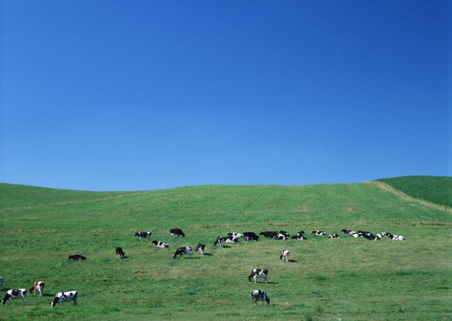 牛のいる牧場の風景