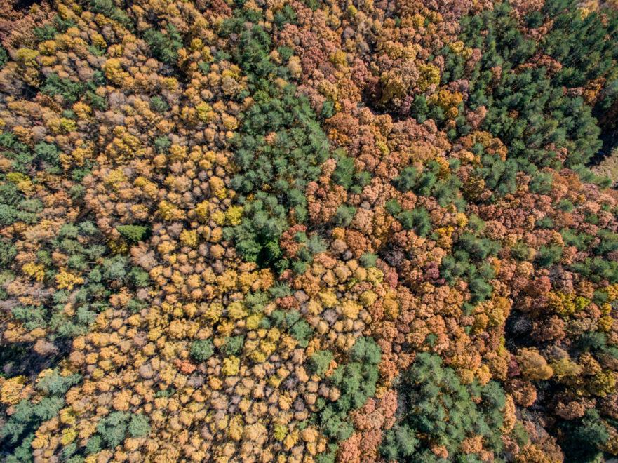 ブナやミズナラ、コナラの広葉樹林に混在する針葉樹。安芸太田町