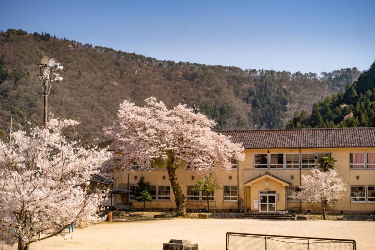 旧 津浪小学校の桜の木