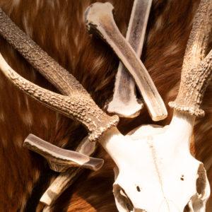 鹿のオブジェとドッグガム
