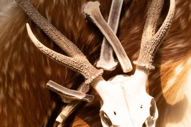 鹿の頭蓋骨のオブジェと鹿角のドッグガム