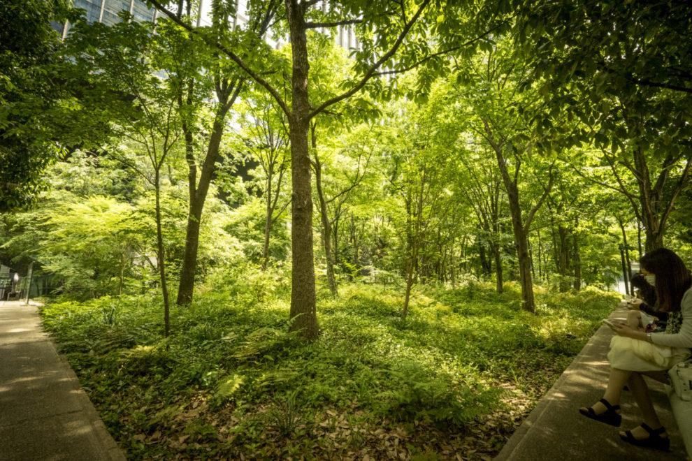 東京の大手町にある人口の生態系「大手町の森」