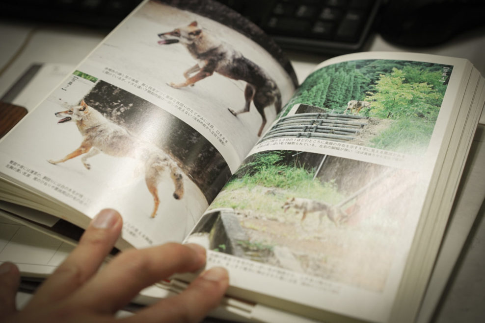 西田智氏著 ニホンオオカミは生きている
