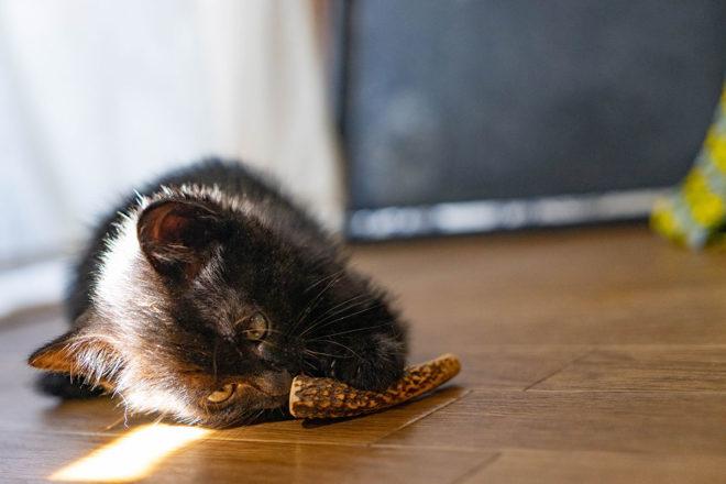 黒猫のルーさん