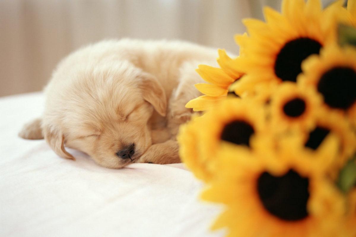 犬とアレルギー、マイクロバイオーム ..抗生物質
