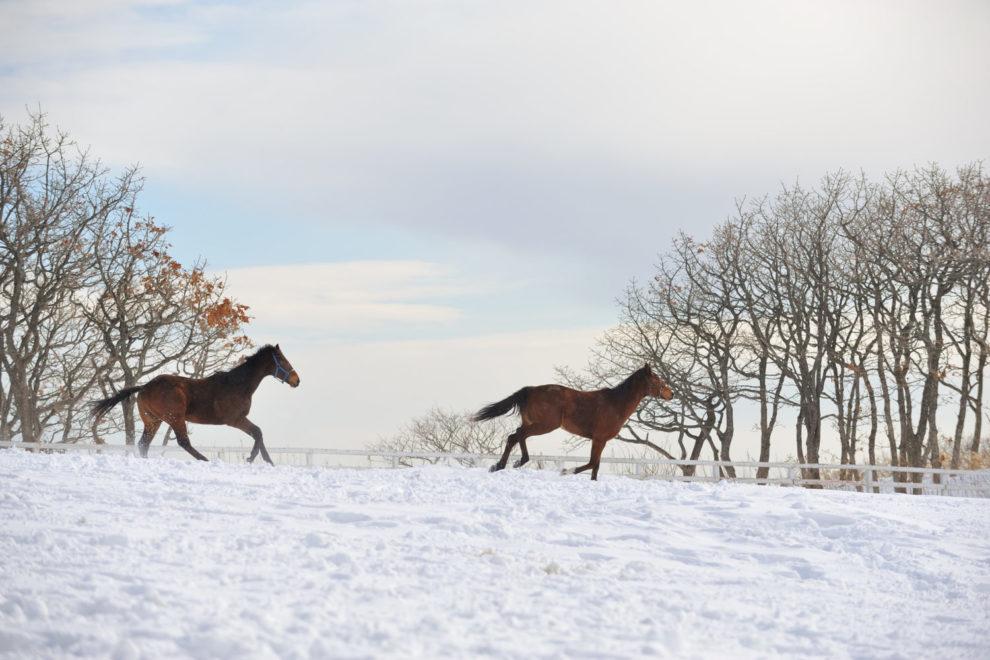 日高地方の馬産地風景