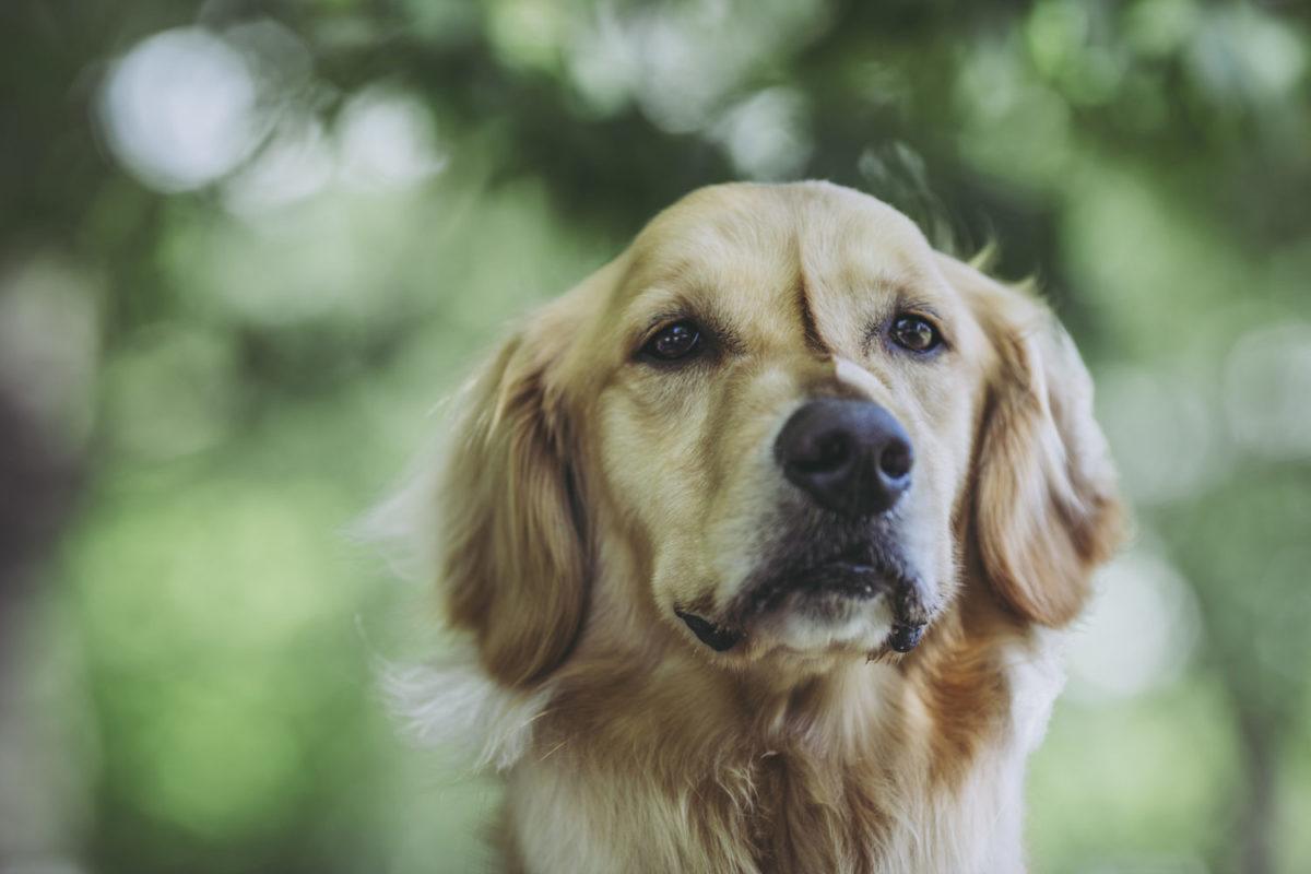 犬の皮膚トラブルとその原因