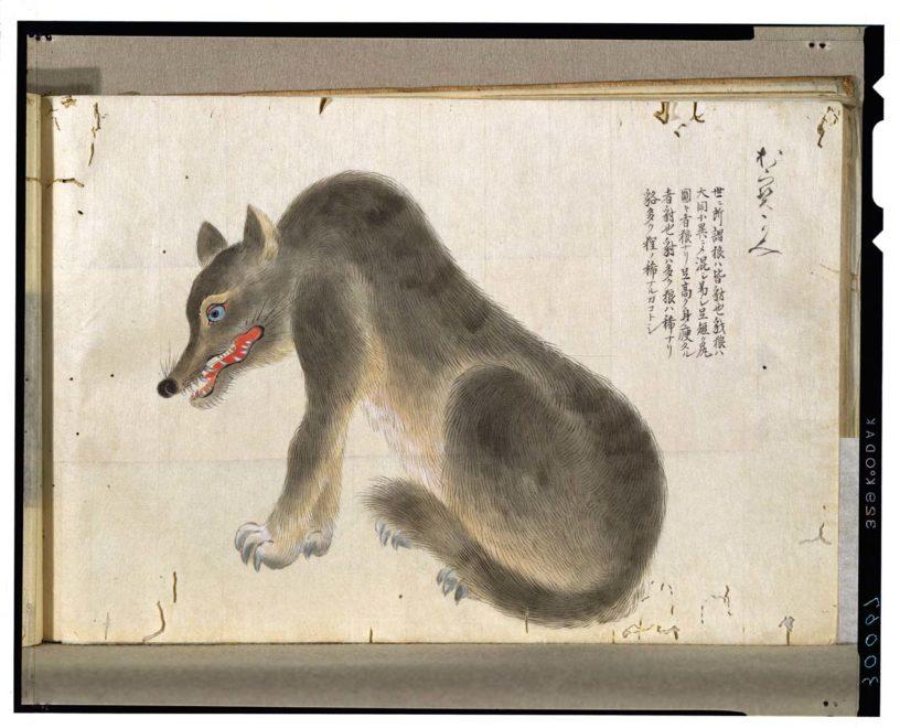 ニホンオオカミ の絵