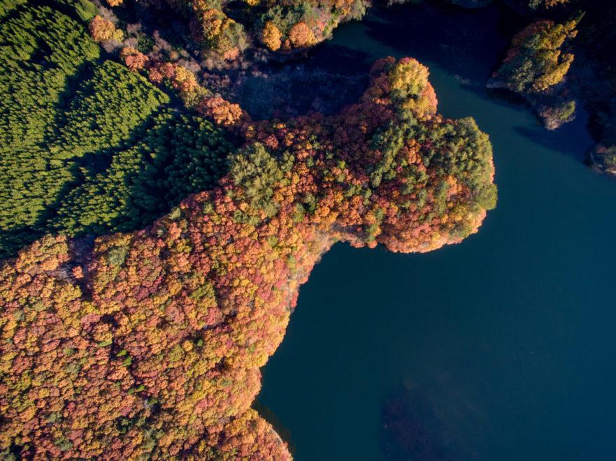 聖湖の広葉樹林