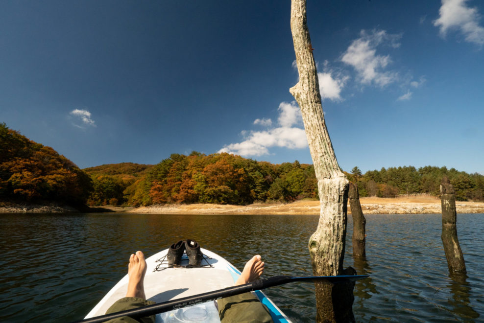 湖面から突き出す古木