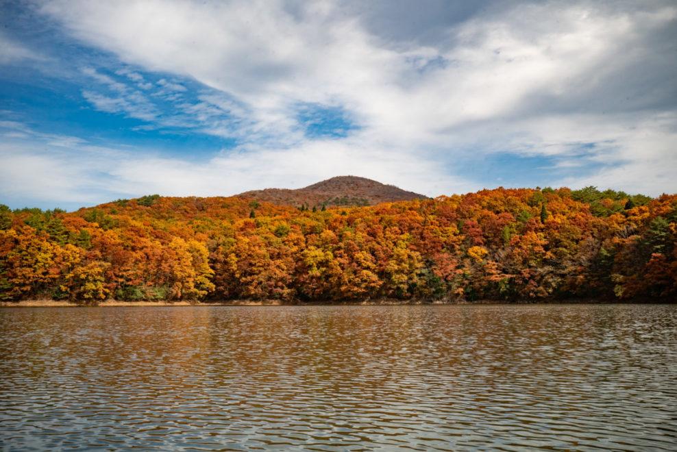 落葉した臥龍山と麓の紅葉