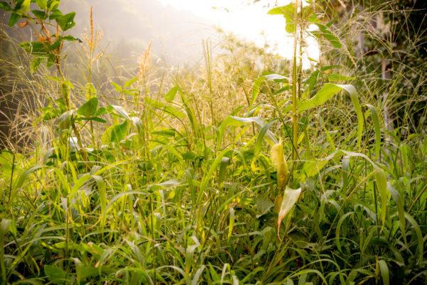 在野の草花に圧倒される農園