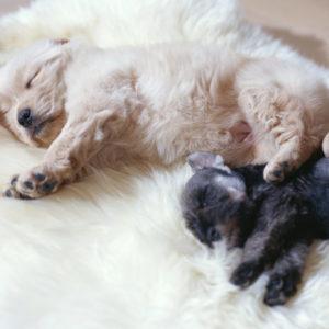 子犬たち,犬の素材