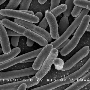 大腸菌 E.coli