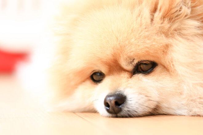 原因は食事?それともダニ? 犬と猫のアレルギー検査について